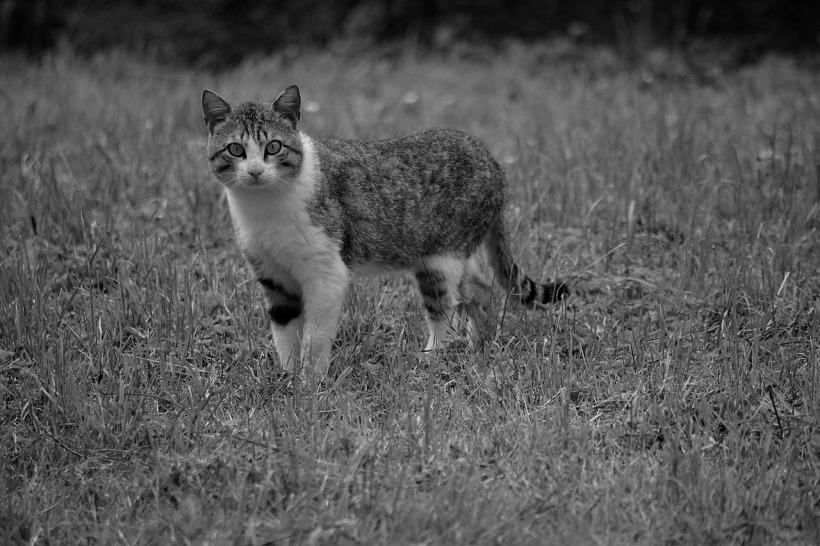 cat-1915124_1280