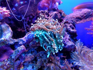 coral-1053837_1280