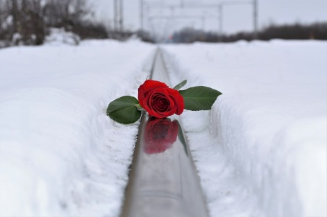 red-rose-in-snow-3273572_1280